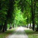 12.-l-allee-du-parc-municipal--mairie-de-la-mothe-saint-heray-.jpg