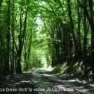 14.-ancienne-voie-ferree-dans-la-vallee-de-chambrlle--mairie-de-la-mothe-saint-heray-.jpg