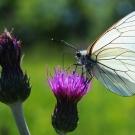 406251-papillon-2474-2.jpg