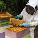 apiculture---pouffonds--pw--0599.jpg