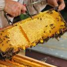 apiculture---pouffonds--pw--0629.jpg