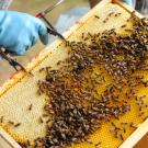 apiculture---pouffonds--pw--0660.jpg