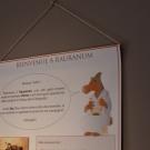 musee-rauranum-hchaudron--8----redim.jpg