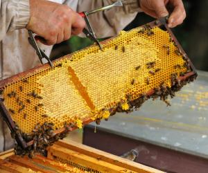image de Couette et potager d'Antan - Activité apicole