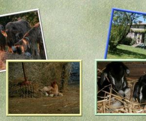 image de Gîte de la ferme du champ du parc