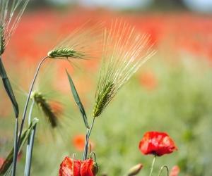 image de Gîte Rural - M Chatain René