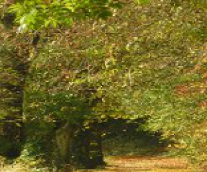 image de Arboretum forestier des Deux-Sèvres